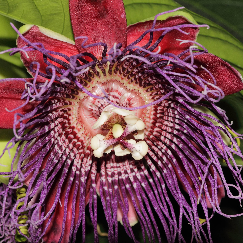 Необычные комнатные растения и тропические цветы
