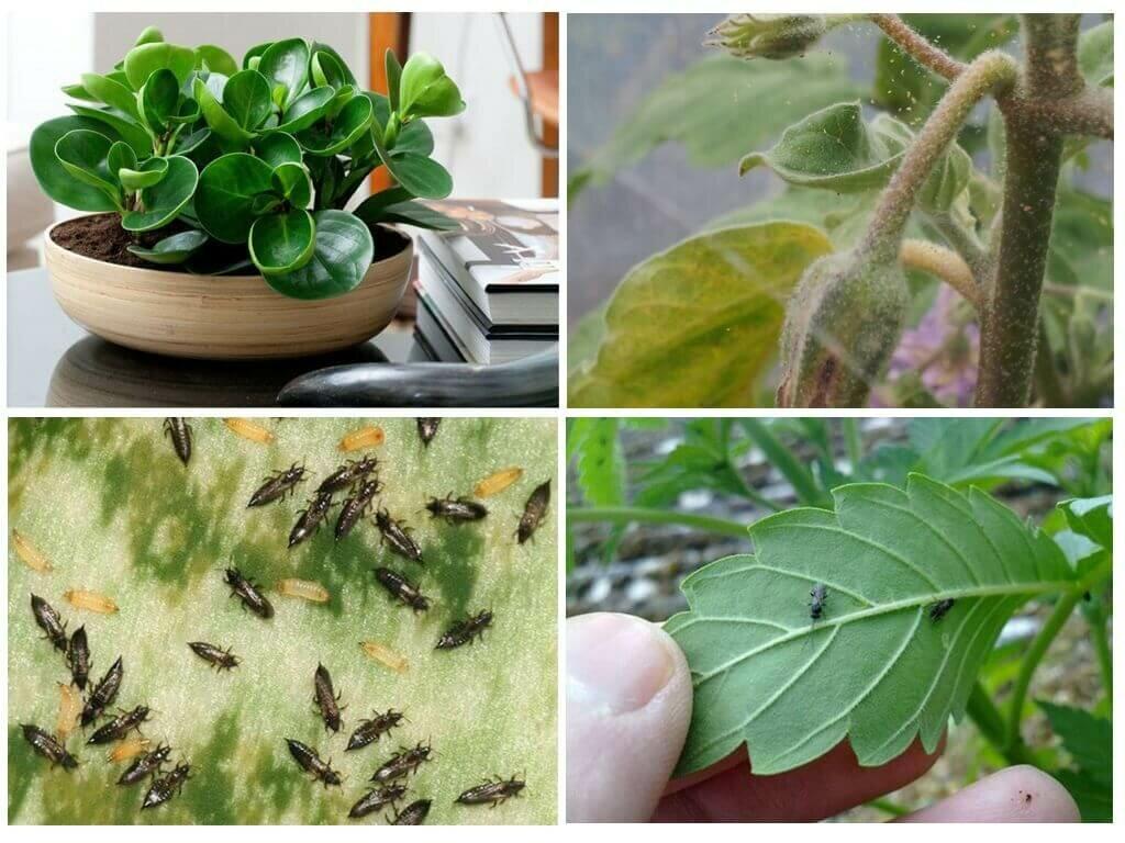 Вирусные и бактериальные болезни растений