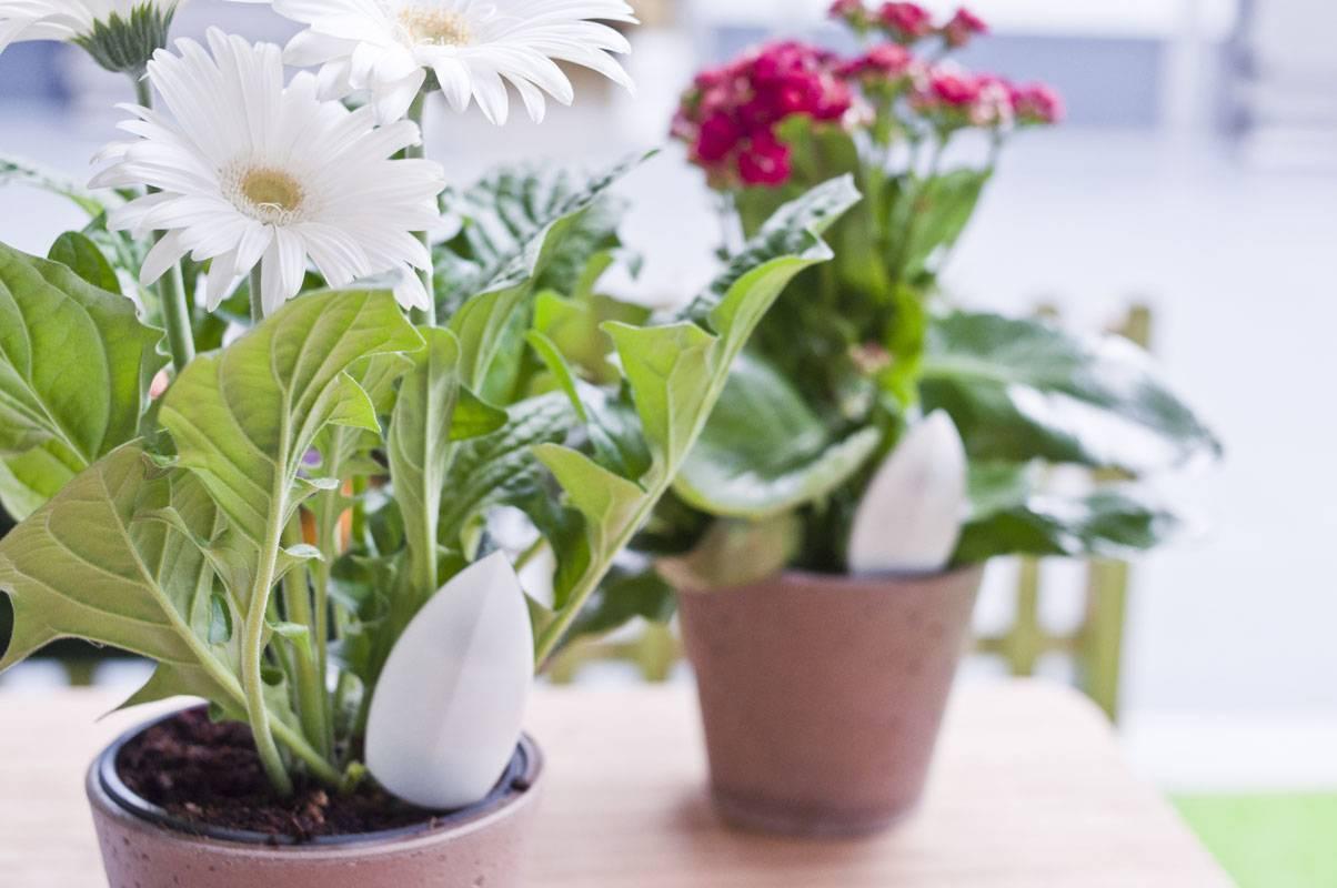 Удобрение для комнатных растений в домашних условиях